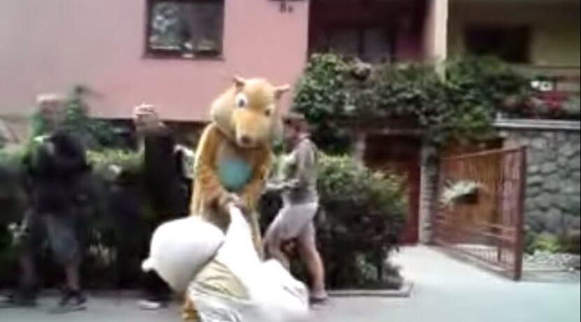 Hit internetu: Dzikie zwierzęta w Zakopanem (film)