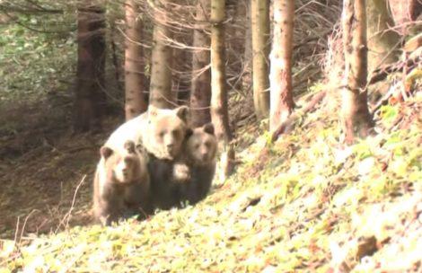 Spotkanie z niedźwiedzią rodziną (film)