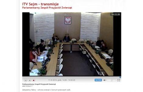 W Sejmie debatują o koniach z Morskiego Oka