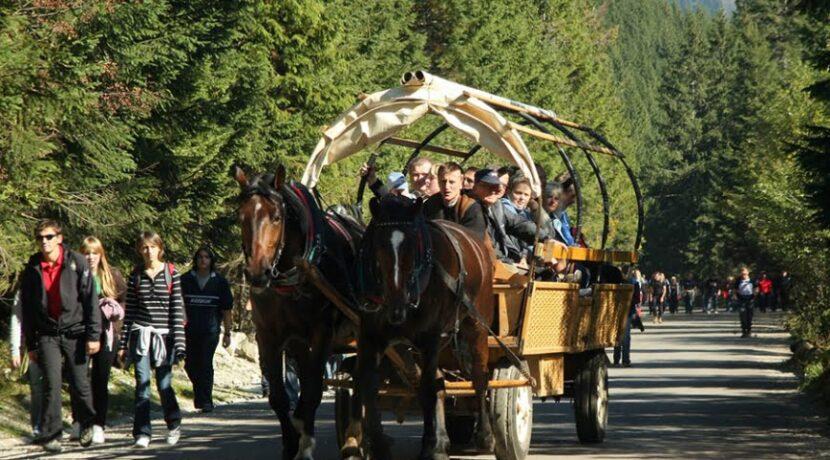 W TPN debatowano nad dalszym losem koni