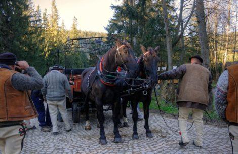Badania obciążenia koni na drodze do Morskiego Oka – sprzeczne wnioski ekspertów