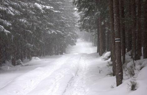 W bajkowym tatrzańskim lesie (ZDJĘCIA)