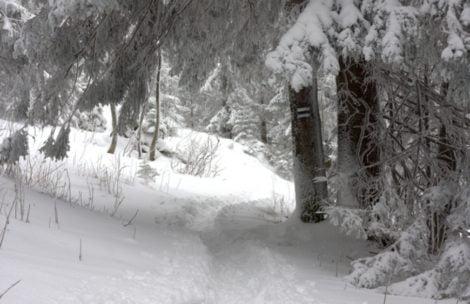 W krainie śniegu – Ścieżka nad Reglami (zdjęcia)