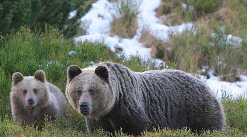 W Tatrach niedźwiedzie budzą się ze snu