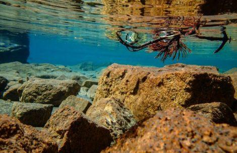 Podwodne zdjęcia w tatrzańskich stawach (GALERIA)