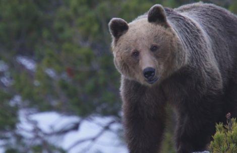 """""""Tajemnicze Karpaty"""" – w świecie dzikiej przyrody (film)"""