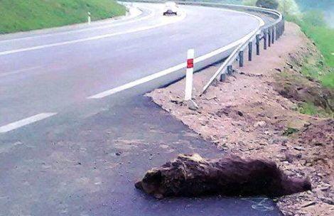 Tatrzański niedźwiedź zginął potrącony przez samochód