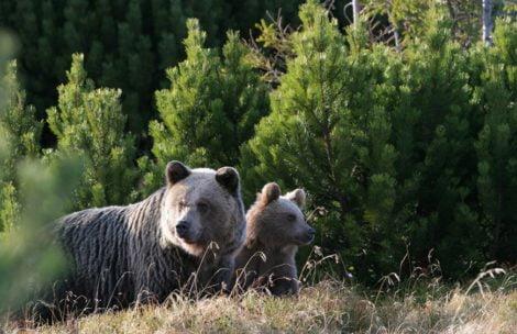 """Niedźwiedź """"zapukał"""" do schroniska w Tatrach"""