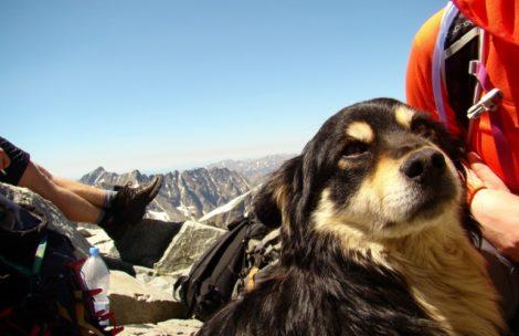 Pies znaleziony na Rysach, szukamy właściciela!