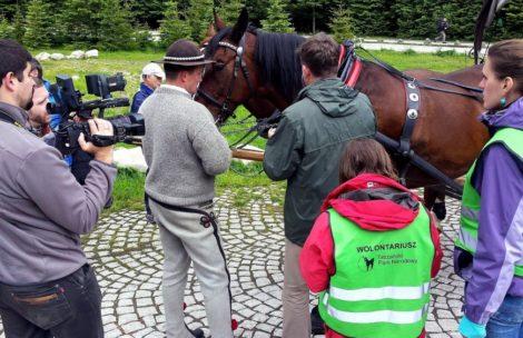 Badają konie na drodze do Morskiego Oka
