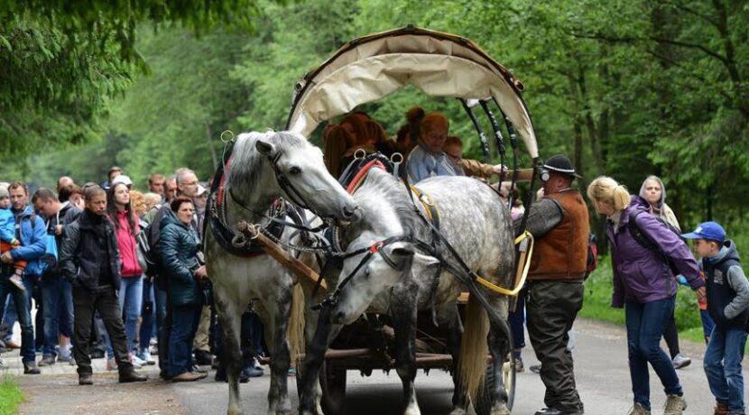 """Morskie Oko: """"Konie są w lepszym stanie niż się mówi"""""""