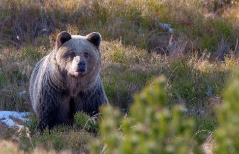 """""""Idzie za mną niedźwiedź"""" – nietypowy telefon do TOPR"""