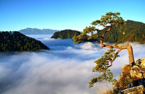 Morze chmur i Tatry w oddali. Magiczny poranek w Pieninach (ZDJĘCIA)