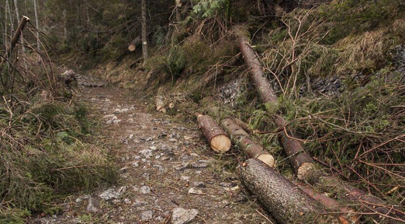 Siła halnego: Zakopane bez prądu, na Kasprowym wiało prawie 200 km/h
