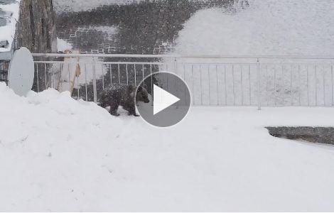 Niedźwiadek na Kasprowym Wierchu (FILM)