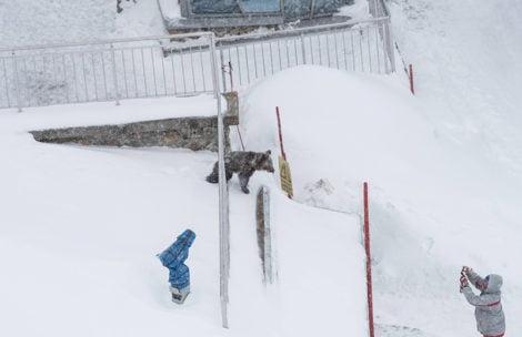 Sprawa niedźwiadka z Kasprowego Wierchu: Jest oficjalne oświadczenie TPN