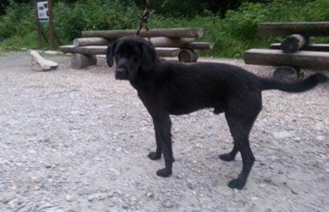 W Tatrach znaleziono młodego psa. Poszukiwany właściciel