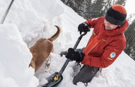Psy lawinowe TOPR w akcji (FILMY)