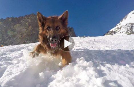 Tatry z psiej perspektywy. Wycieczka do Terinki (FILM)