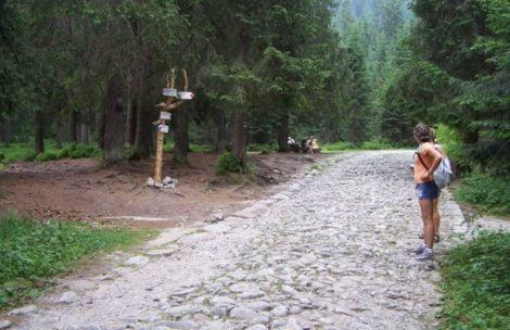 Mężczyzna ukąszony przez żmiję w Tatrach. Uważajcie na siebie!