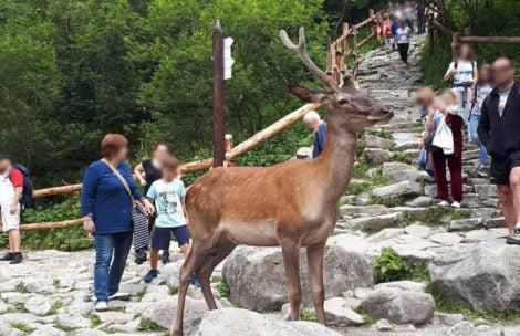 Nie dokarmiajcie dzikich zwierząt w Tatrach!