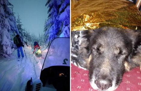 Skiturowcy zabrali zimą psa w góry. Zwierzę zasłabło