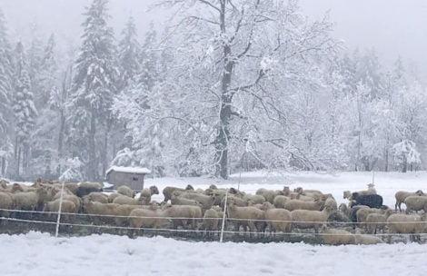 Śnieżne krajobrazy w Zakopanem i Tatrach – aktualne zdjęcia