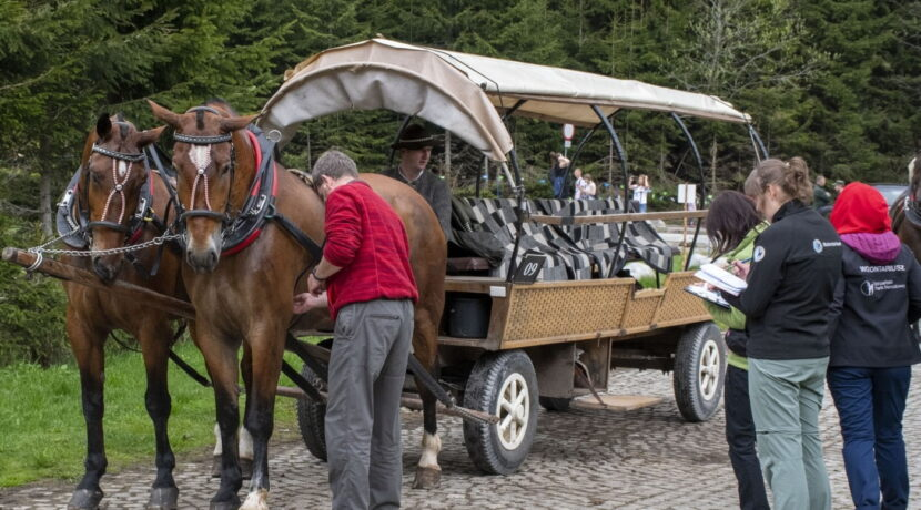 Przebadano konie pracujące na drodze do Morskiego Oka. Znamy wstępne wyniki