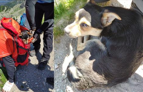 Turyści znieśli psa ze Świnicy. Czy ktoś go rozpoznaje?
