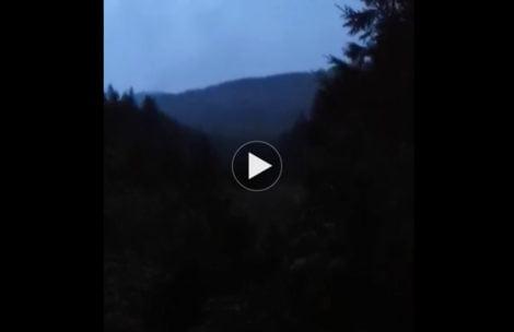 Tak brzmi rykowisko – posłuchaj wyjątkowego nagrania z Tatr (FILM)