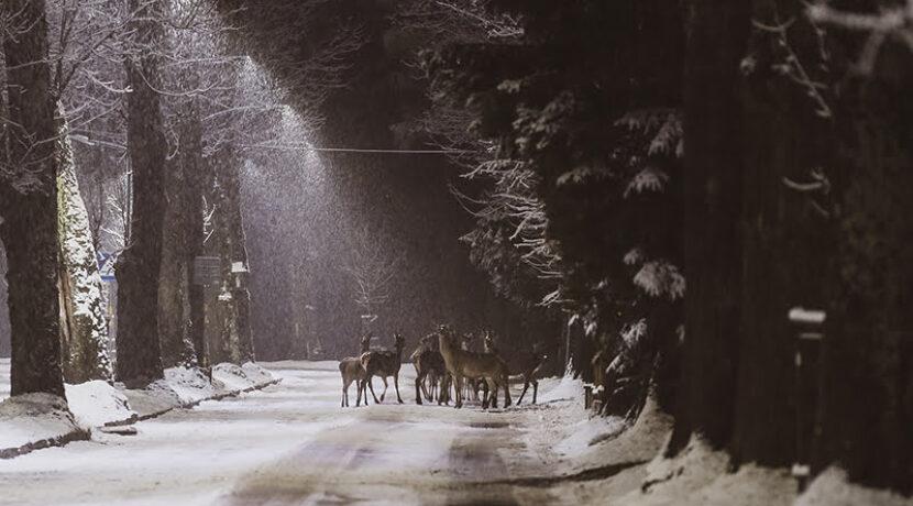 Tak wyglądało zimowe Zakopane dzisiejszej nocy (ZDJĘCIA)