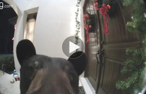 Niedźwiedź dzwoni dzwonkiem do drzwi (FILM)