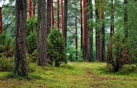 Minister Środowiska: parki narodowe otwarte, w lesie można chodzić bez maseczki