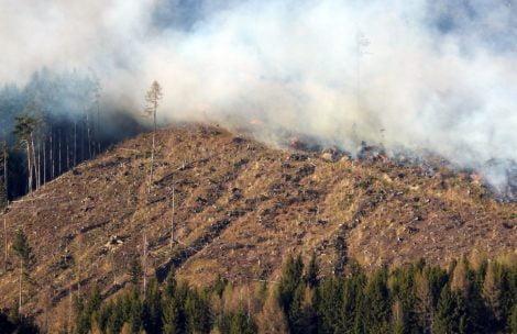 Pożar w Tatrach Zachodnich! Ogień rozprzestrzeniał się bardzo szybko