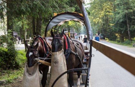 Oświadczenie fiakrów w sprawie wypadku z udziałem konia na drodze do Morskiego Oka
