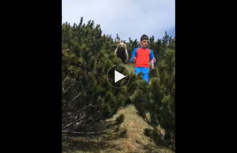 Oto jak zachować stoicki spokój podczas bliskiego spotkania z niedźwiedziem (FILM)