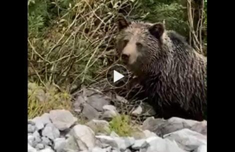 Wczorajsze spotkanie z niedźwiedziem w Dolinie Kościeliskiej (FILM)