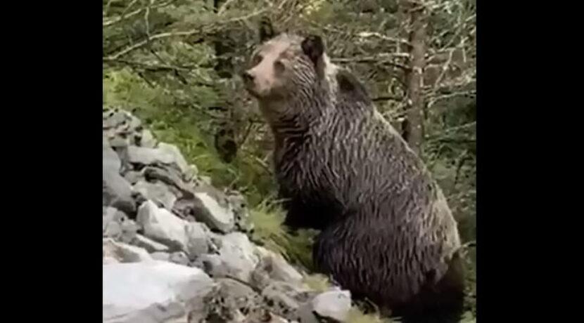 Spotkanie z niedźwiedziem w Dolinie Kościeliskiej – komentarz przyrodnika z TPN