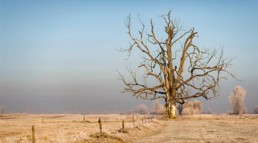 Słynne drzewo w Czarnym Dunajcu przestało istnieć