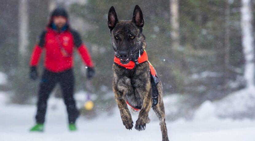 Zaginął pies ratowniczy, GOPR prosi o pomoc