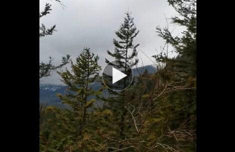 Halny taki, że wygina drzewa! Nagranie z okolic Doliny Kościeliskiej (FILM)
