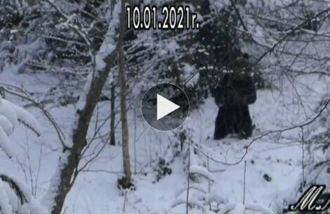 """""""Naubliżałem dzisiaj niedźwiedziowi"""" – czyli jak zachować stalowe nerwy w lesie (FILM)"""