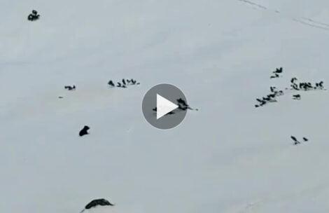 TPN wyjaśnia powody zamknięcia szlaków. Nagranie z młodym niedźwiadkiem chwyta za serce (FILM)